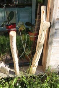Chêne américain Quercus rubra (gauche) ; je ne sais plus (droite)